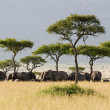 Elephant Herd — Stock Photo