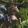 Horse equine statue with green background — Stock Photo