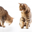 Cat's motions — Stock Photo