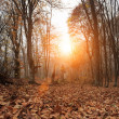 Deep forest autumn — Stock Photo