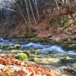 Autumn morning near the river — Stock Photo