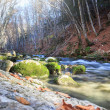 River deep in the forest — Stock Photo