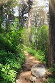 Strada nel bosco profondo — Foto Stock