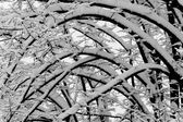 Arcs of branches covered by snow — Stock Photo