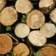 Stock Photo: Sawn wood piled