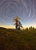Orbital Motion Dead Tree — Stockfoto