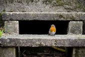 Robin On Stairs In The Garden — Stock Photo