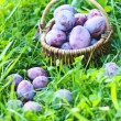 Plums — Stock Photo