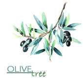 Olive Twig — Stock Photo