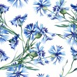 Cornflowers Seamless Pattern — Stock Photo