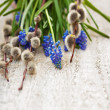 muscari and willow twigs — Stock Photo