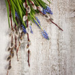 Stock Photo: muscari and willow twigs