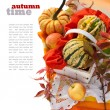 Pumpkins and Apples — Stock Photo