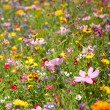 Background of Flowers Field — Stock Photo