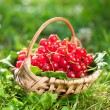 Red currant — Stock Photo #34398975
