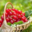 Red currant — Stock Photo #34398985