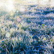 Frozen grass — Photo