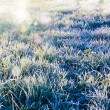 Frozen grass — 图库照片