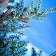 Fir tree branch — Foto de stock #34687079