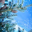 Fir tree branch — Stock Photo #34687085