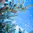 Fir tree branch — Stockfoto #34687085
