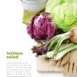 Lettuce salad — Stock Photo