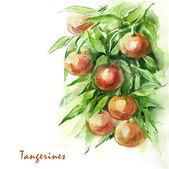 Tangerines — Zdjęcie stockowe