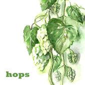 Hops — Stock Photo