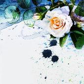 Rosa blanca — Foto de Stock