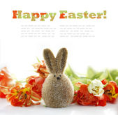 Easter Bunny and Tulips — Stock Photo