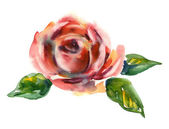 Watercolor -Roses- — Stock Photo