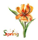 Aquarell - Gelbe Tulpen- — Stockfoto