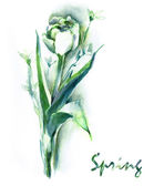 Watercolor -White spring flowers- — Stockfoto