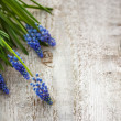Grape hyacinth — Stock Photo #42945935