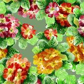 Primula Seamless Pattern — Stock Photo