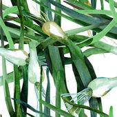 Padrão sem emenda de alho-poró — Fotografia Stock