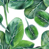 Spinach Seamless Pattern — Stockfoto