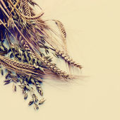 Grain Ears — Stock Photo