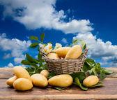 ジャガイモ — ストック写真