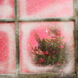Christmas tree in the window — Stock Photo