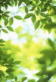 Groene gebladerte — Stockfoto