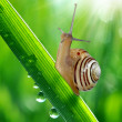 Snail on a stalk — Stock Photo #36000461