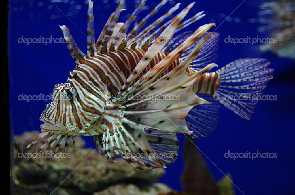 Spiny Fish Royalty Free Stock Photo - Image: 10891205