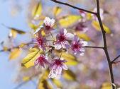 Różowy kwiat folwers — Zdjęcie stockowe