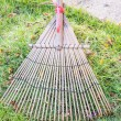 Stock Photo: Cleaning dried grass and leaf in garden by rake (harrow)