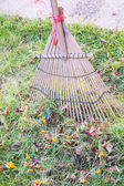 Cleaning dried grass and leaf in the garden by rake (harrow) — Stock Photo