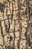 背景の木の樹皮のテクスチャー — ストック写真