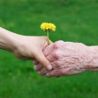 Hands with flower — Stock Photo #38122739