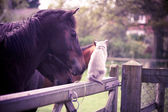 Horse and cat — Stok fotoğraf