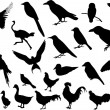Birds silhouettes — Stock Vector